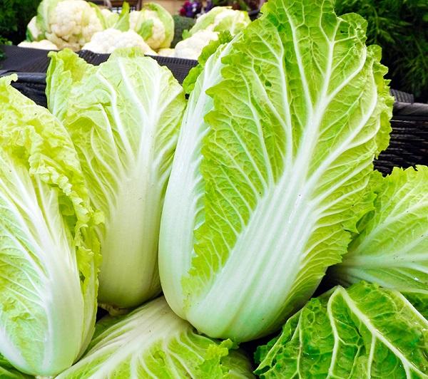 Cải thảo là loại rau ăn lá được nhiều người yêu thích.