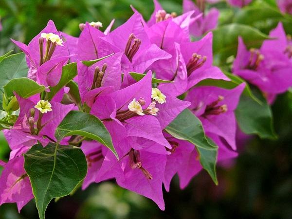 Cận cảnh loài hoa đáng yêu – tuy mong manh nhưng cực kỳ thu hút.
