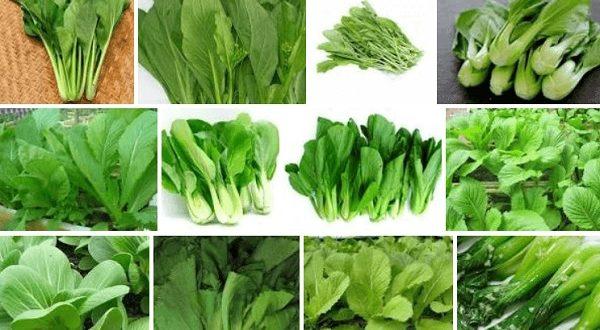 Là loại rau đa dạng và quen thuộc trong những bữa ăn gia đình.