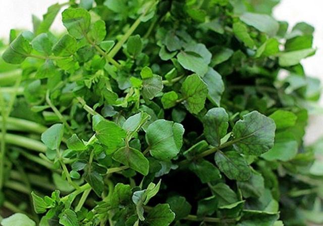 Loại rau đem lại nhiều giá trị dinh dưỡng lại dễ trồng nhanh thu hoạch.