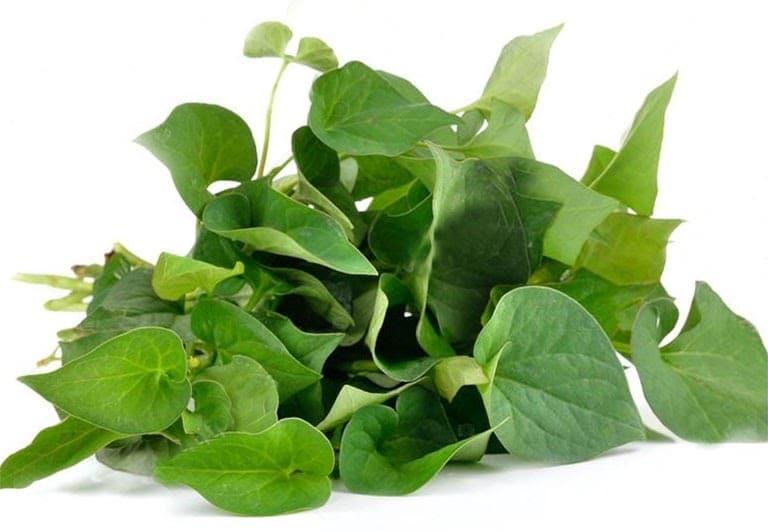 Loại rau nhiều công dụng lại rất dễ trồng.